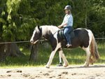 two Purebred Friesian horses available.
